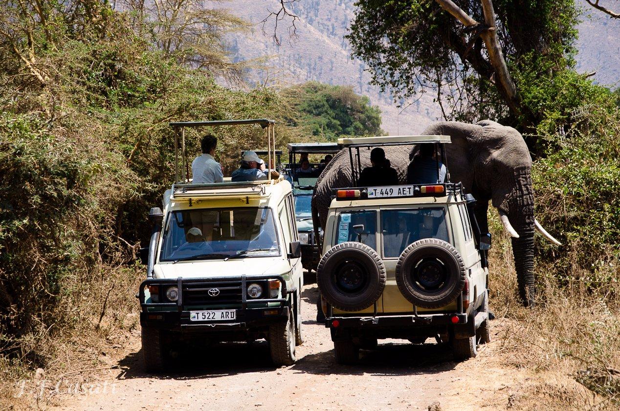 Rough Road Safaris, Arusha, Tanzania
